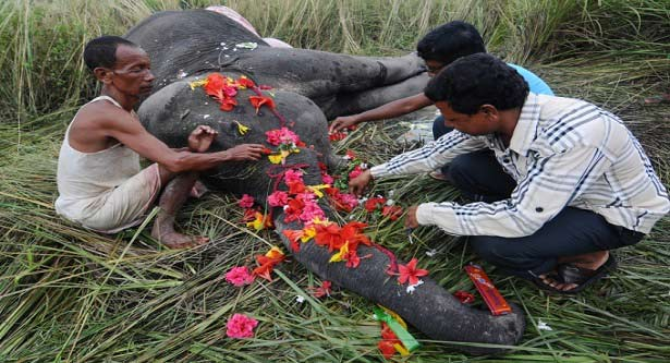 Five elephants hit and killed by train in India