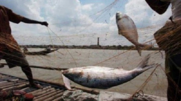 Hilsa fishing banned in Meghna-Tetulia for two months