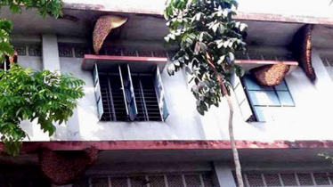 Beehives in UP building, funding for winter clothes