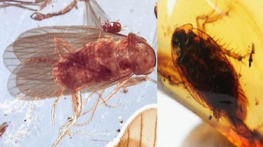 Cockroaches of thousands mn yrs found in amber