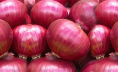 India resumes onion export officially