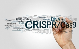 CRISPR baby mutation significantly increases mortality