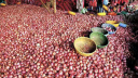 Onions to be sold at Tk 45 in 35 places in capital