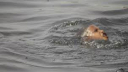 Three children from a family drown in Patuakhali