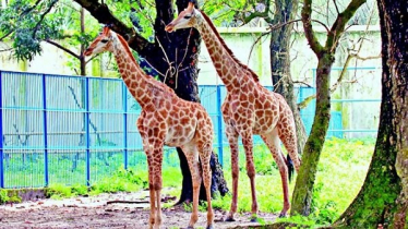 Visitors to get free access to Zoo on 1st Sunday of every month