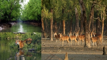 Sundarbans to open for tourists today