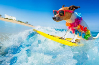 Dogs in surfing contest instead of human amid COVID-19 (video)