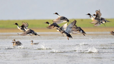 Arrival of migratory birds begins in northern region