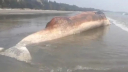 A giant whale washed up on Cox's Bazar beach